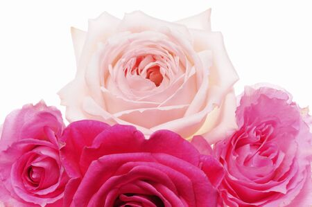 birdseye view: The birds-eye view up of pink and red roses in white back