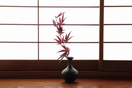 refers: Arrange of maple to back Japan between Shoji