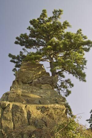 chubu: Pine rock Stock Photo