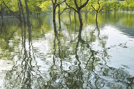 sauce: Willow Lake