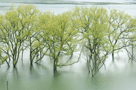 willow: Willow Lake
