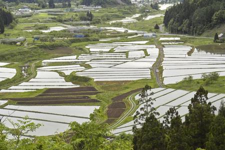 terraced: Nakazawa of terraced rice fields