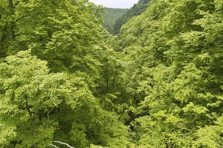 hermit: Hermit Valley