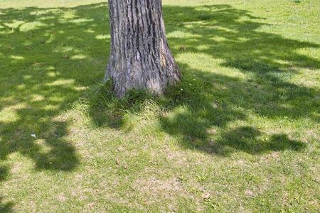 to shade: Shade of a tree