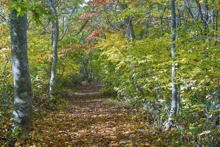 defoliation: Road of defoliation