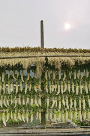 radish: Radish Dried
