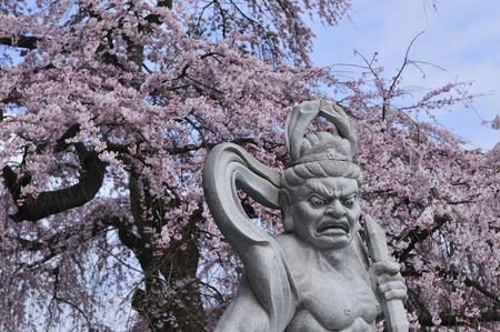 stone buddha: Stone Buddha and cherry
