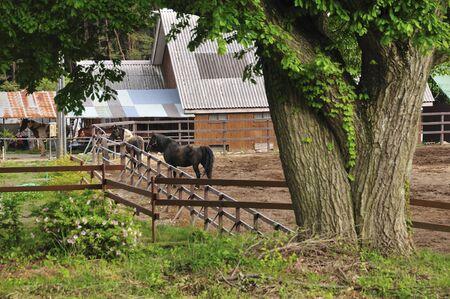 馬の馬小屋