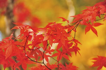 filtering: Autumn leaves