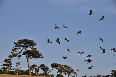 animal kite: Bird Stock Photo
