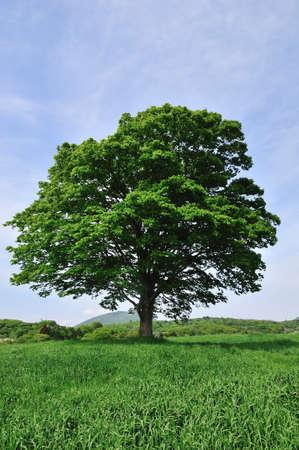 grassland: Tree meadow Stock Photo