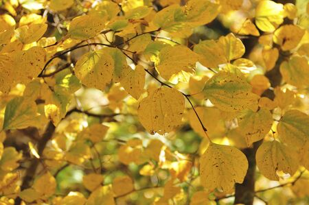 filtering: Yellow leaves.