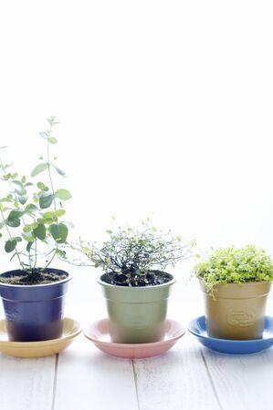 Houseplant Three