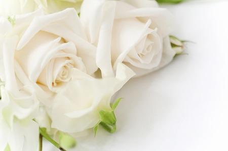 Bouquet de rose blanche Banque d'images - 40289769