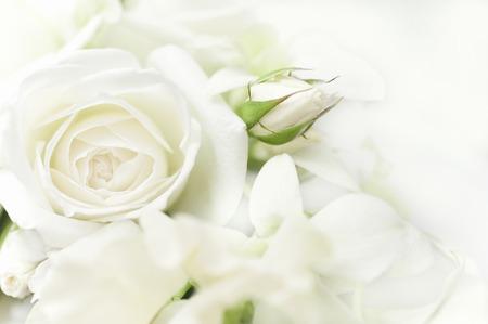 Bouquet de roses blanches Banque d'images - 40289773