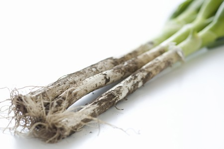 green onion: Mud with green onion