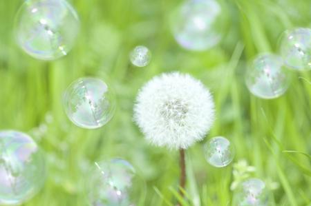 fluff: Dandelion fluff and bubbles Stock Photo