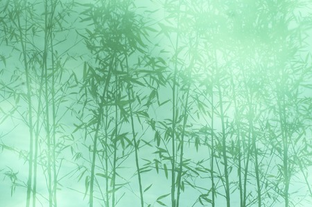 reflected: Bamboo forest reflected in the pond Stock Photo