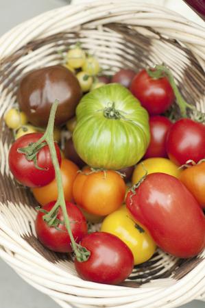 over the counter: Tomato