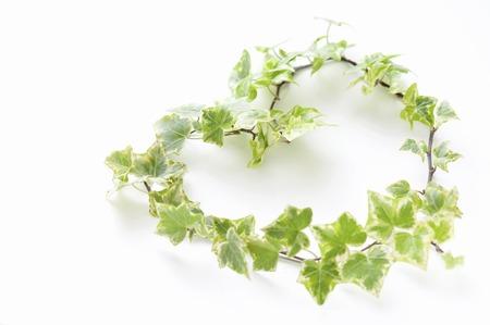 heartshaped: Heart-shaped ivy