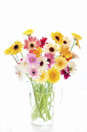 いたずらなガーベラの花瓶 写真素材