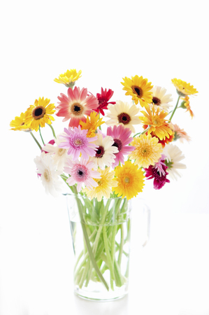 Naughty Gerbera Vase Stock Photo Picture And Royalty Free Image