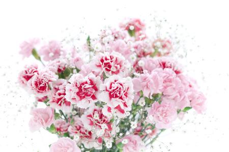 florid: Carnation bouquet