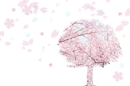 Cherry Blossom tree photo