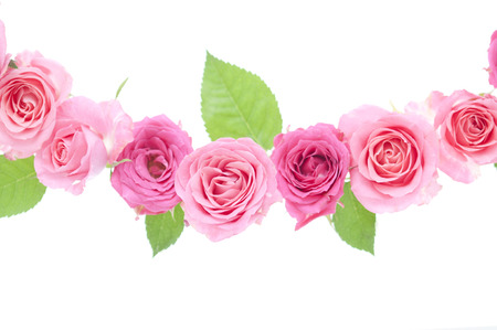 pink roses: Pink Roses Stock Photo