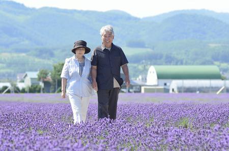 Senior couple walking through the lavender fields Stock Photo