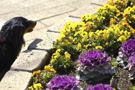 flowerbed: Dog View flowerbed