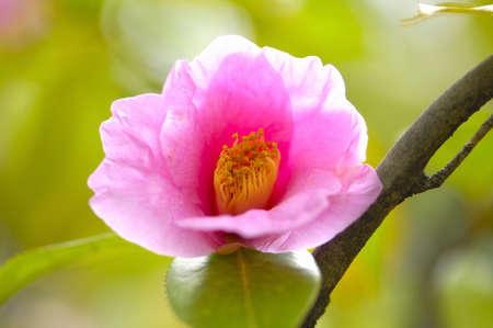 apology: Wabisuke flowers