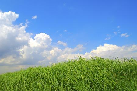 青い空と入道雲