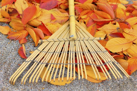 Fallen leaves and rake Stock Photo