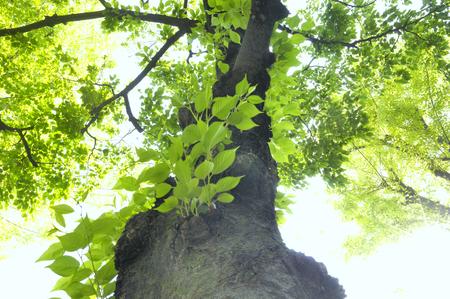 신선한 녹색의 잎에서 덮는 단일 두꺼운 줄기 스톡 콘텐츠