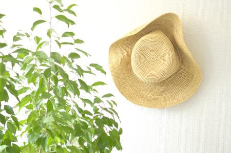 chapeau paille: Les plantes ornementales et chapeau de paille