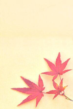 crimson colour: Maple Leaf