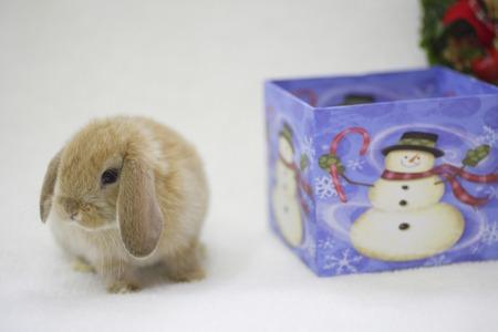 bunny xmas: Bunny Christmas