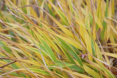 brute: Karekkusu that brute color to autumn