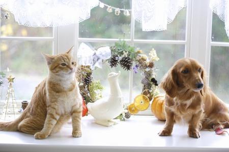 White windowsill of miniature and cats