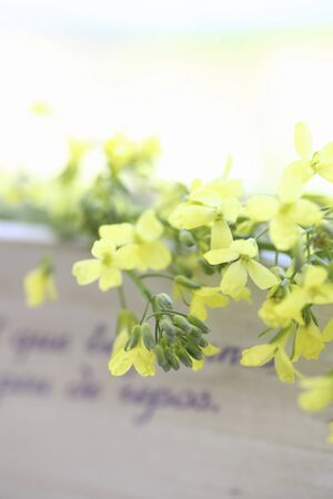 miscellaneous: Yellow flowers and Country miscellaneous goods of broccoli