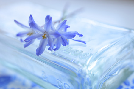 glass jars: Glass jars with blue flowers chyonodogusa