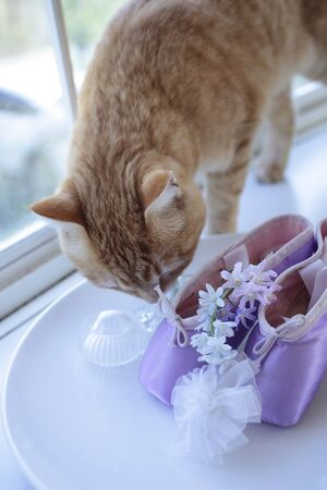 miscellaneous: Windowsill of miscellaneous goods and cats anxious