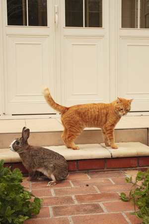Garden that there is a cat and a rabbit