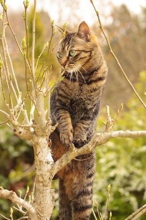 climbed: Cat climbed the tree of the garden