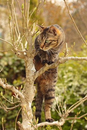 climbed: Cat climbed the tree of the garden
