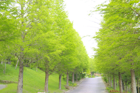 early summer: Fresh green of early summer Park Avenue