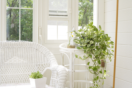 green plants: Garden room chairs and green plants Stock Photo
