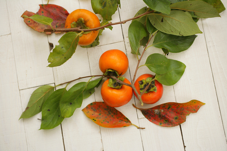 oyster plant: Persimmon Stock Photo