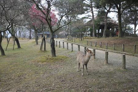 animal only: Kataoka Nara Park Bairin